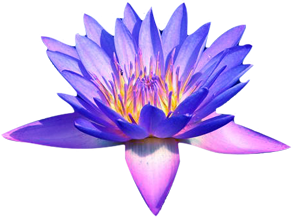 Mythology Of The Blue Lotus