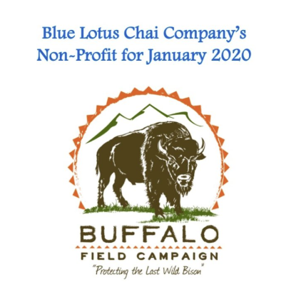 Non-Profit of The Month - JAN - Buffalo Field Campaign